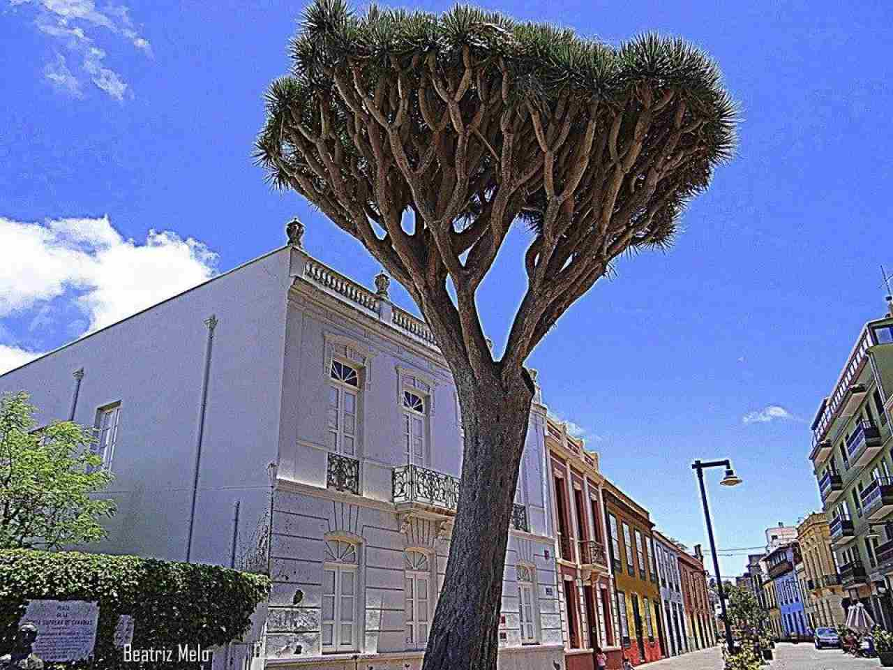 Alquiler de habitaciones San Cristóbal de La Laguna, Santa Cruz de Tenerife