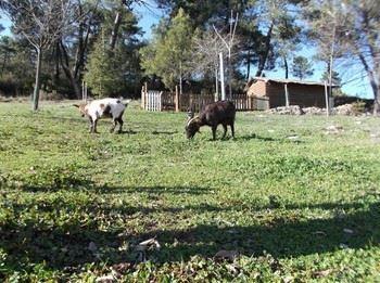 Alquiler vacacional en Segura de la Sierra, Jaén
