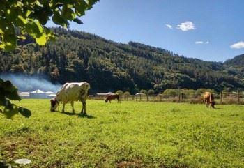 Alquiler vacacional en Navelgas, Asturias